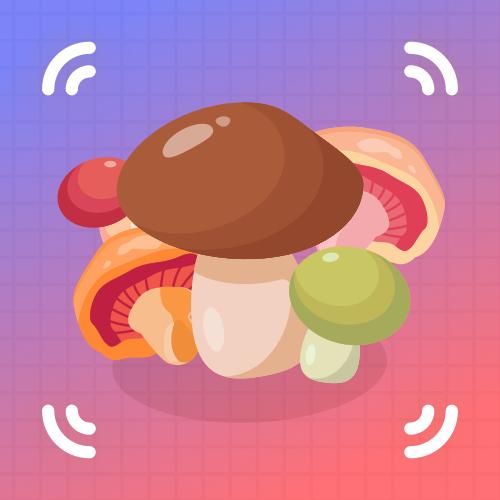 什么蘑菇?